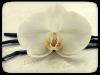 ванильная орхидея - нота аромата Lovely Garden