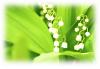 Сердце аромата - майский ландыш